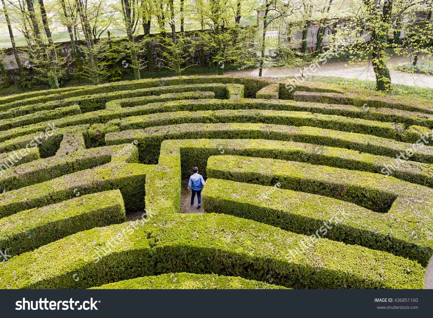 Green Bushes Labyrinth Hedge Maze Young Stock Photo
