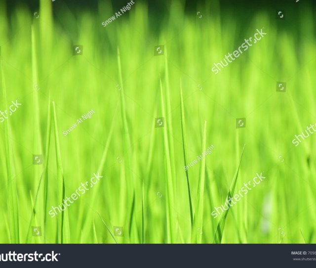 Green Grass Leave On The Field With Bright Light And Forest Background For Wallpaper Space