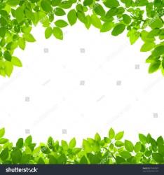 border leaves shutterstock