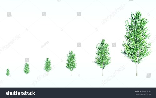 small resolution of green tree with leaf growth diagram business cycle development eco concept the different