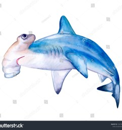 hammerhead shark white death of a shark isolated on a white background watercolor illustration template card clipart close up illustration [ 1500 x 1401 Pixel ]