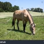 Horse Photography Animal Shot Capturing Beautiful Stock Photo Edit Now 1015149517