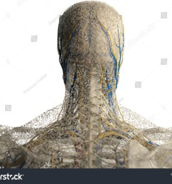 human anatomy head neck and shoulders covered in network of dots bio tech [ 1500 x 1180 Pixel ]