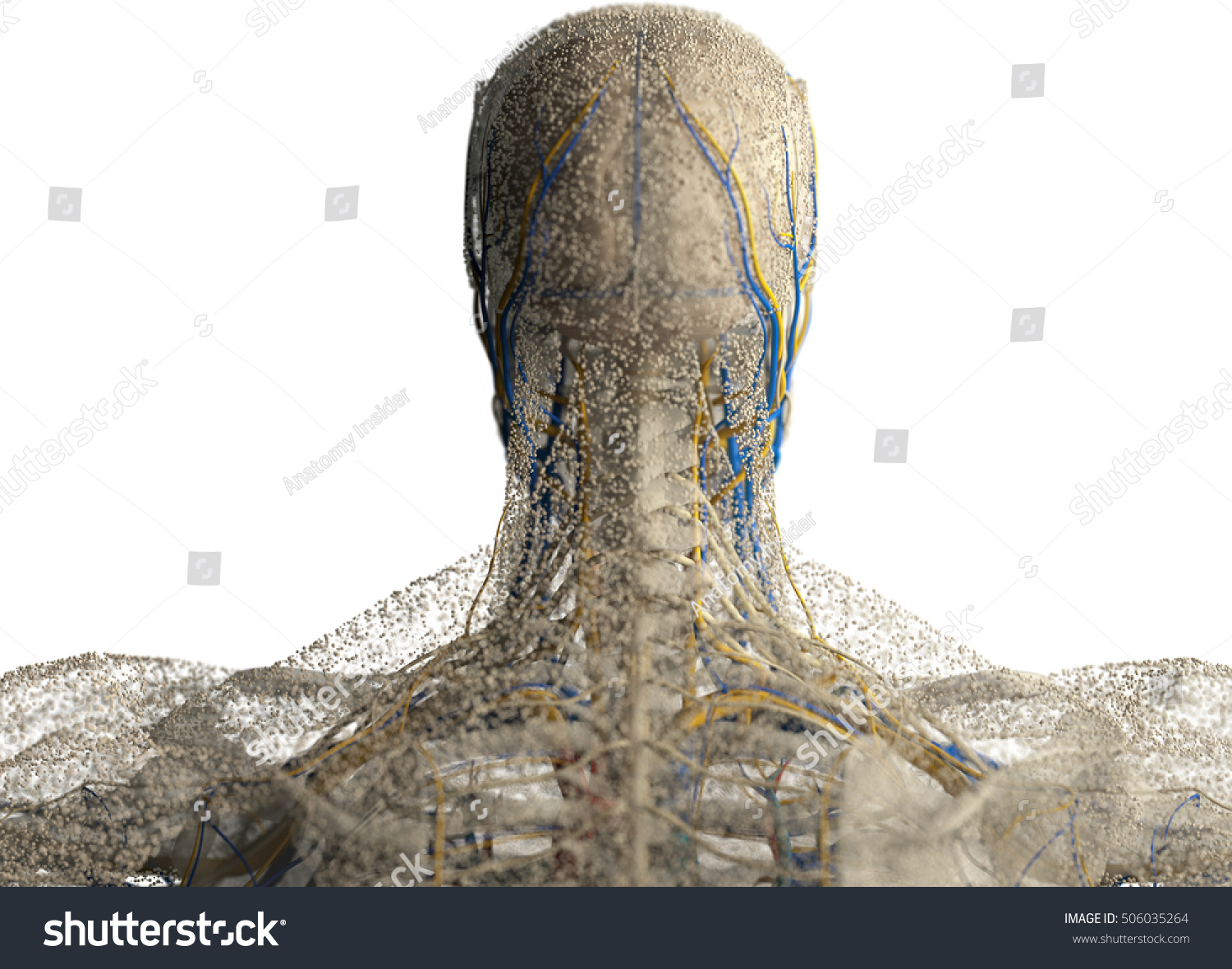 hight resolution of human anatomy head neck and shoulders covered in network of dots bio tech