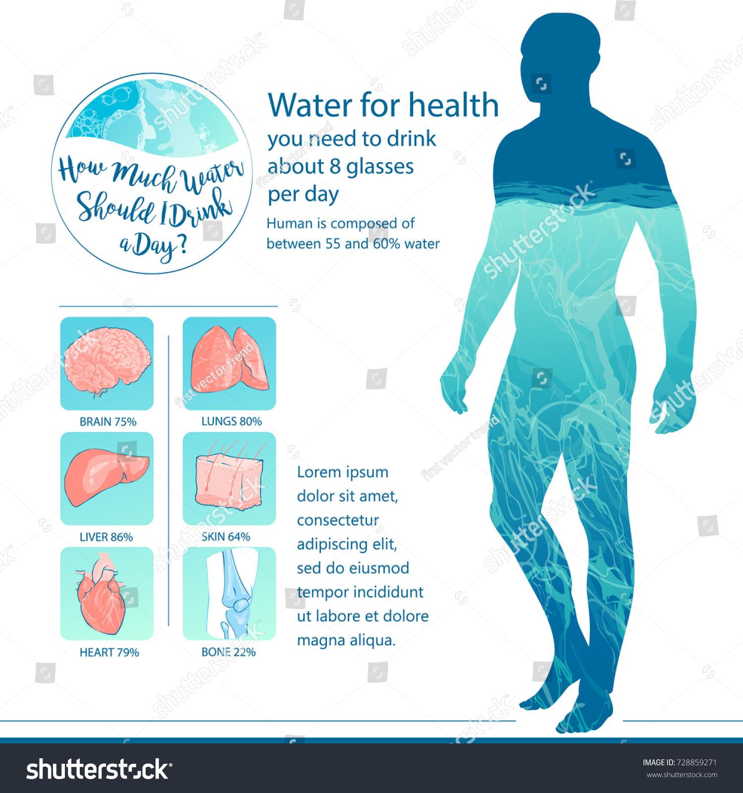 Human Body Internal Organs Balance Water Stock