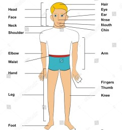 human body parts including head face neck shoulder elbow waist hand leg foot hair eye ear nose mouth chin arm fingers thumb knee  [ 1163 x 1600 Pixel ]