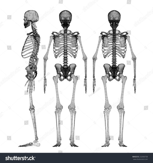 small resolution of human body skeleton body structure wire model
