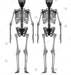 human body skeleton body structure wire model [ 1200 x 1600 Pixel ]