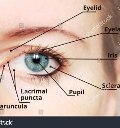 diagram of eye description wiring diagram used diagram of eye description [ 1500 x 1096 Pixel ]