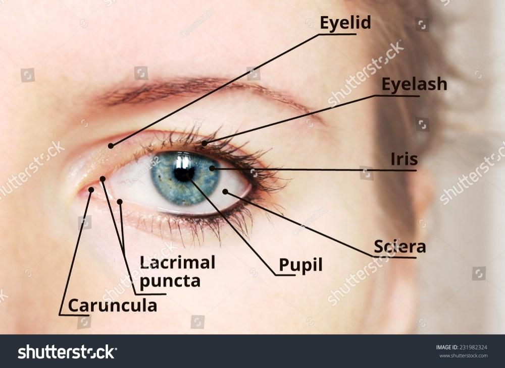 medium resolution of diagram of eye description wiring diagram used diagram of eye description