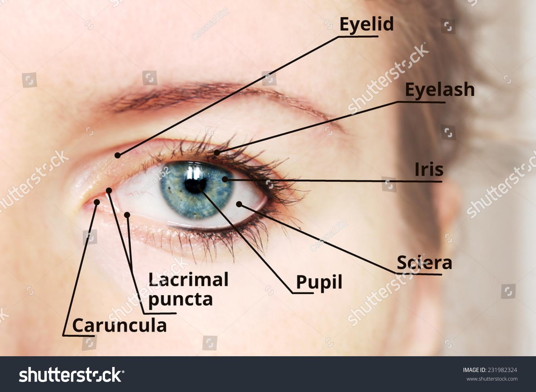 hight resolution of diagram of eye description wiring diagram used diagram of eye description