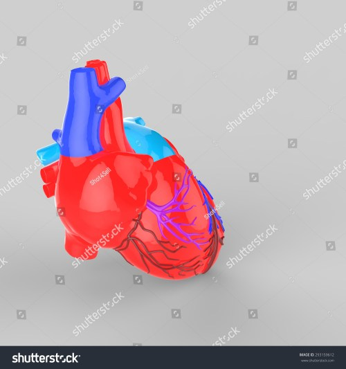 small resolution of human heart