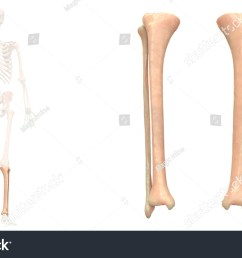 tibia and fibula diagram unlabeled hd 1500 945 [ 1500 x 945 Pixel ]
