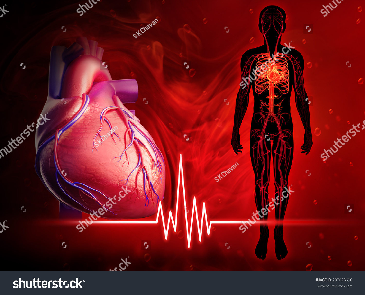 heart beat diagram 1997 saturn sc1 engine illustration of human 207028690