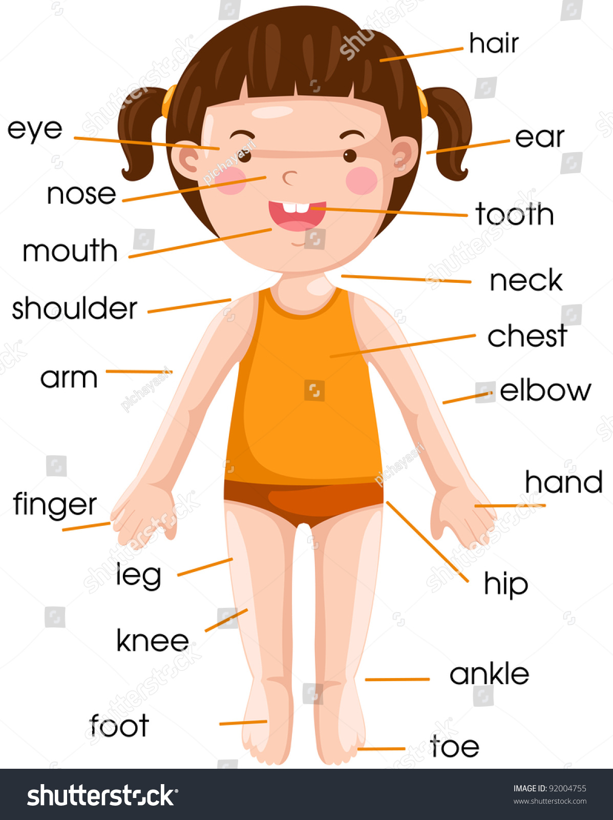 Illustration Isolated Vocabulary Part Body On Stock