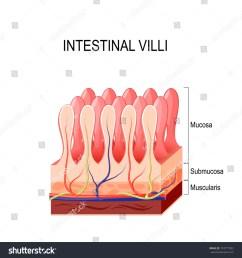 small intestine lining  [ 1500 x 1600 Pixel ]