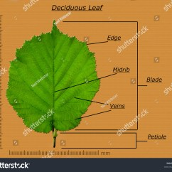 Fern Simple Diagram Universal Turn Signal Wiring Related Keywords And Suggestions For Leaf