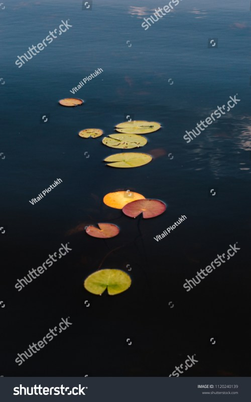 small resolution of leaves of water lilies