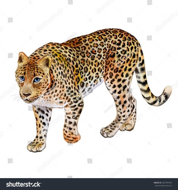 Leopard White Background Watercolor Illustration Stock