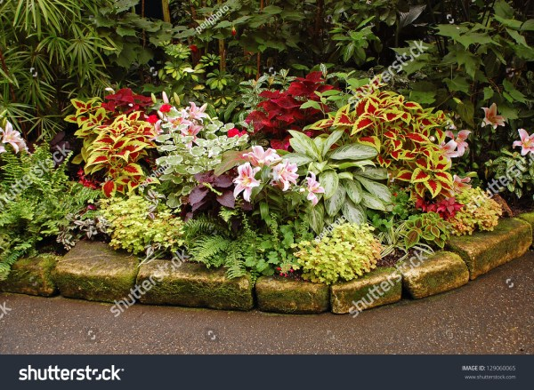 lush tropical garden with assorted