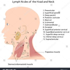 Diagram Of Lymph Nodes In Neck And Head Motorcycle Starter Relay Wiring Stock Illustration 149230217