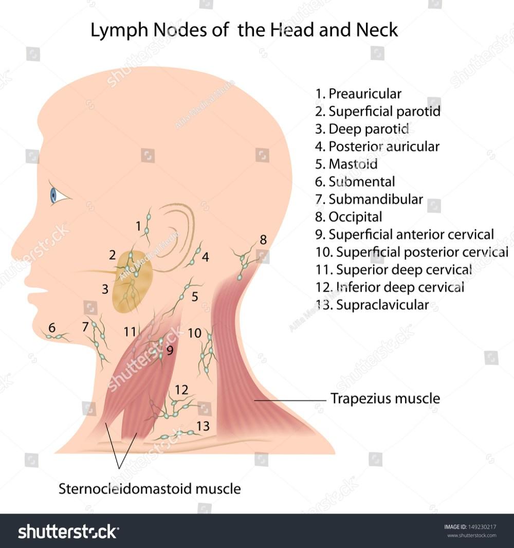 medium resolution of lymph node anatomy diagram