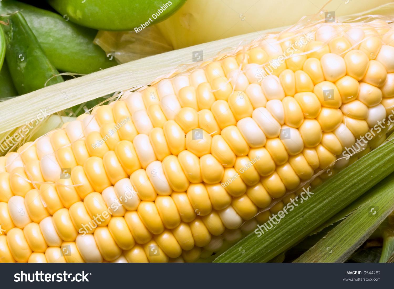 Macro Shot Of Fresh Ripe Sweet Corn Stock Photo 9544282 : Shutterstock