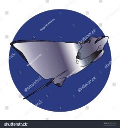 manta ray swimming [ 1500 x 1600 Pixel ]