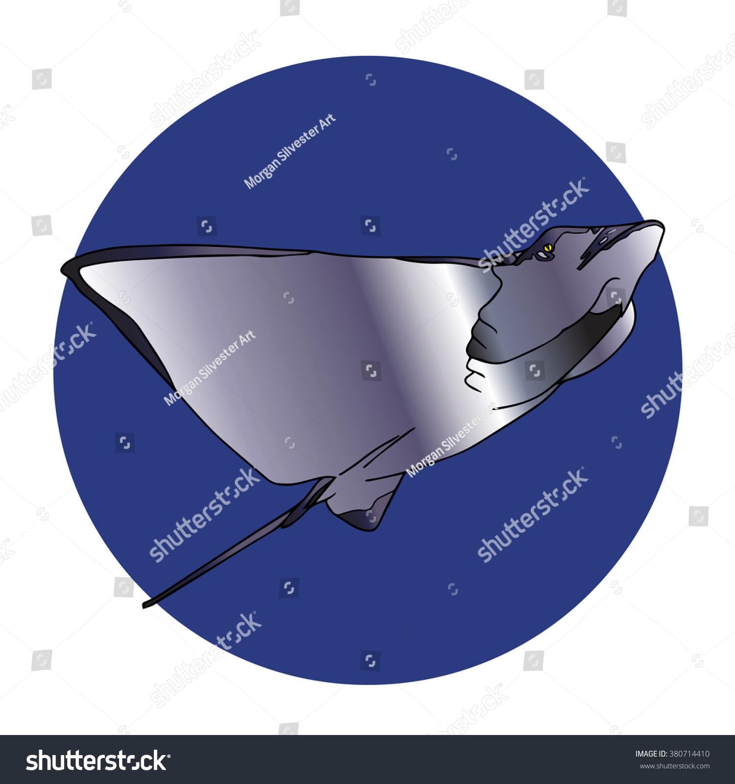 hight resolution of manta ray swimming