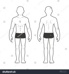 body chart male medical front illustration silhouette muscular human vector isolated diagram types athletic names female muscles anatomy shutterstock organ