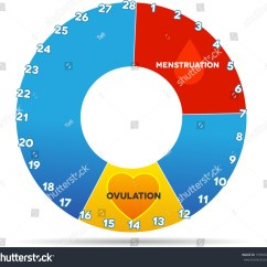 Menstrual Cycle Diagram With Ovulation Wiring For Aprilaire 700 Graphic Average Stock