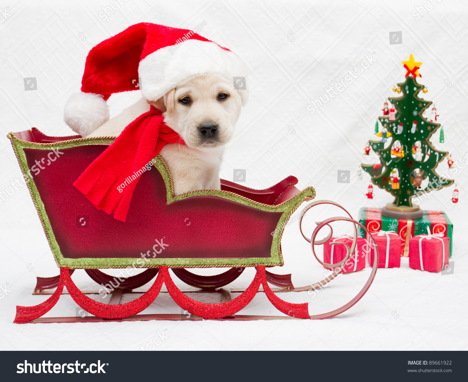 Merry Christmas Portrait Of Cute Labrador Puppy In
