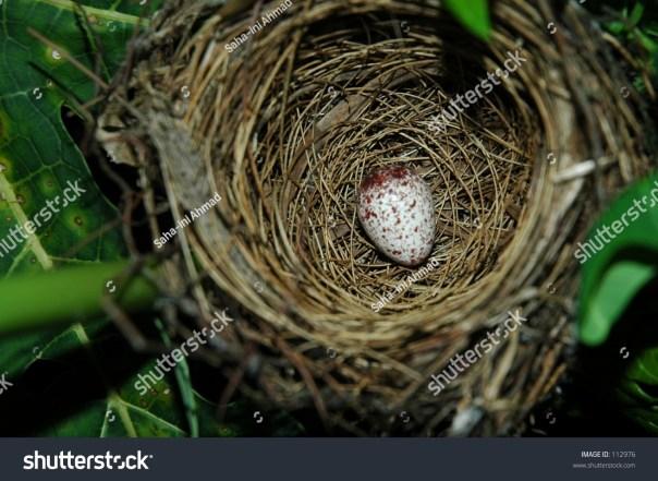 Nest with bird`s egg