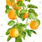 Ilustracoes Stock Imagens E Vetores De Oranges On Branch Watercolor Painting Illustration 287813426