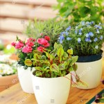Outdoor Flower Pots Small Garden Patio Stock Photo Edit Now 100580041
