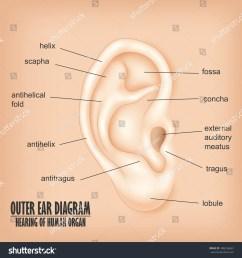 outer ear diagram hearing human organ stock illustration 406236643 shutterstock [ 1500 x 1600 Pixel ]