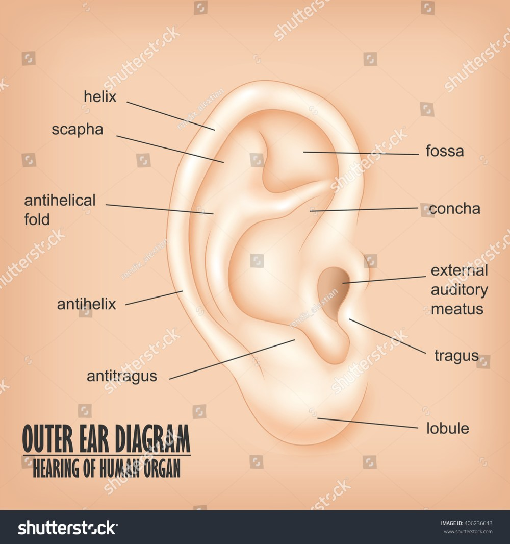 medium resolution of outer ear diagram hearing human organ stock illustration 406236643 shutterstock