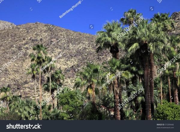 palm springs desert landscape