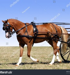 partial isolation of a pony in harness for a carriage [ 1500 x 1327 Pixel ]