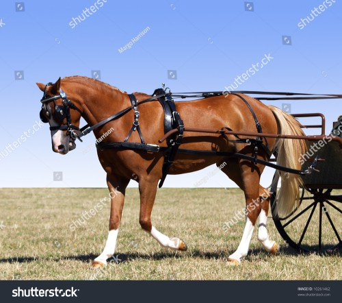 small resolution of partial isolation of a pony in harness for a carriage