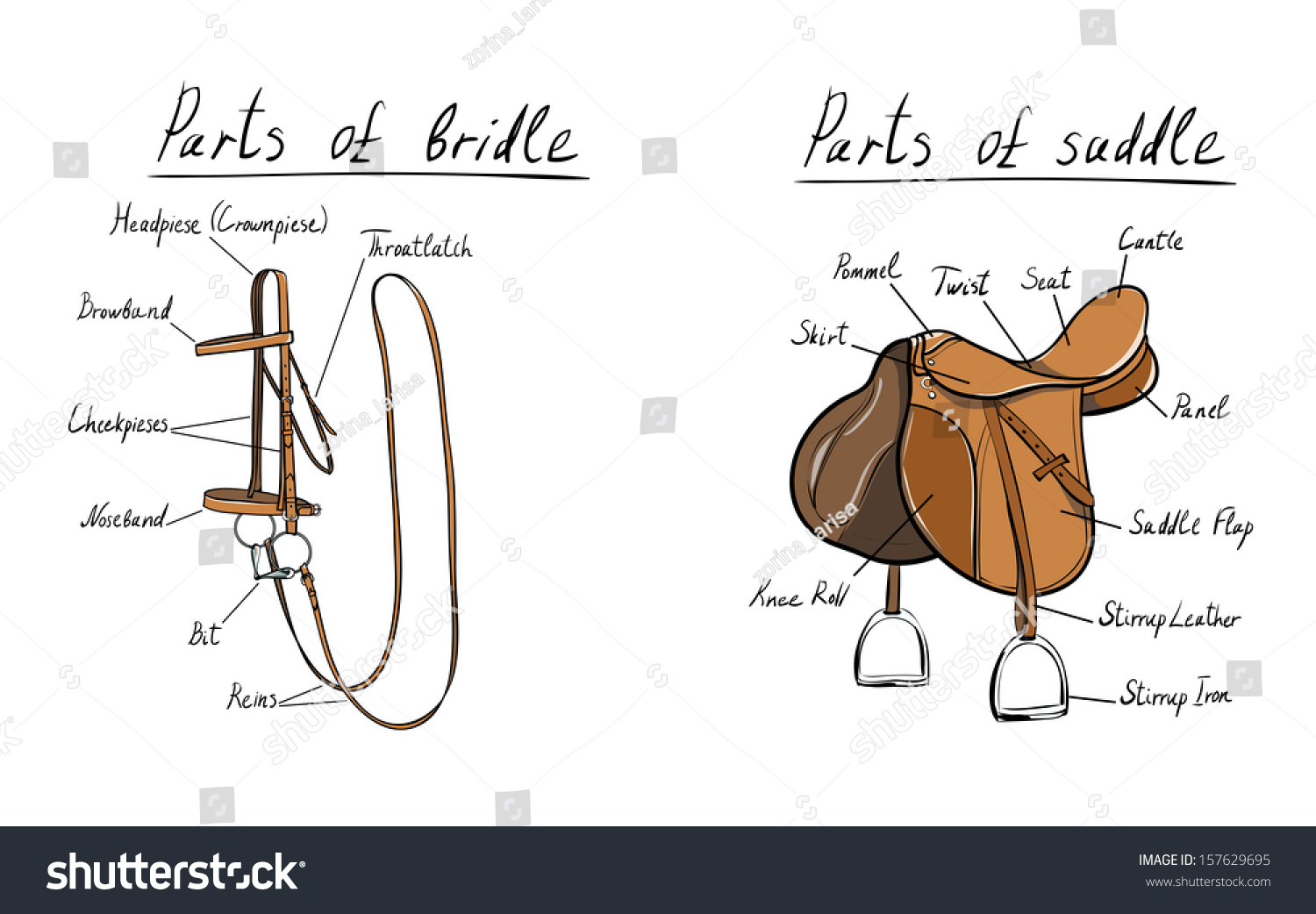 Parts Of Saddle And Bridle Stock Photo