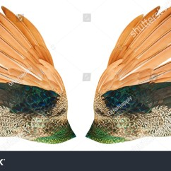 Clipping Duck Wings Diagram Association In Class Example Peacock Wing Stock Photo 144456193 Shutterstock