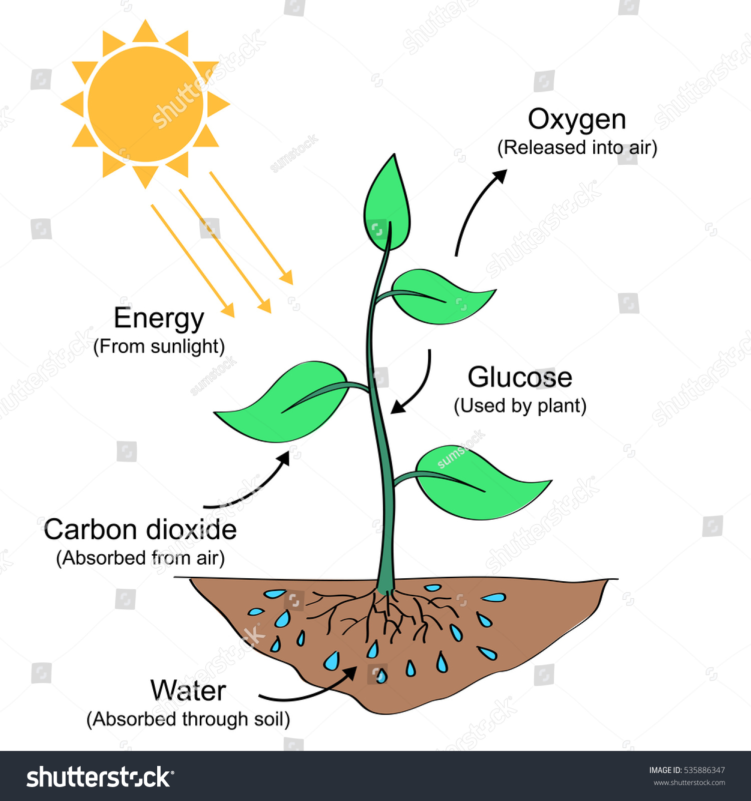 draw a diagram of photosynthesis 2002 chevy impala engine process labelled illustration stock