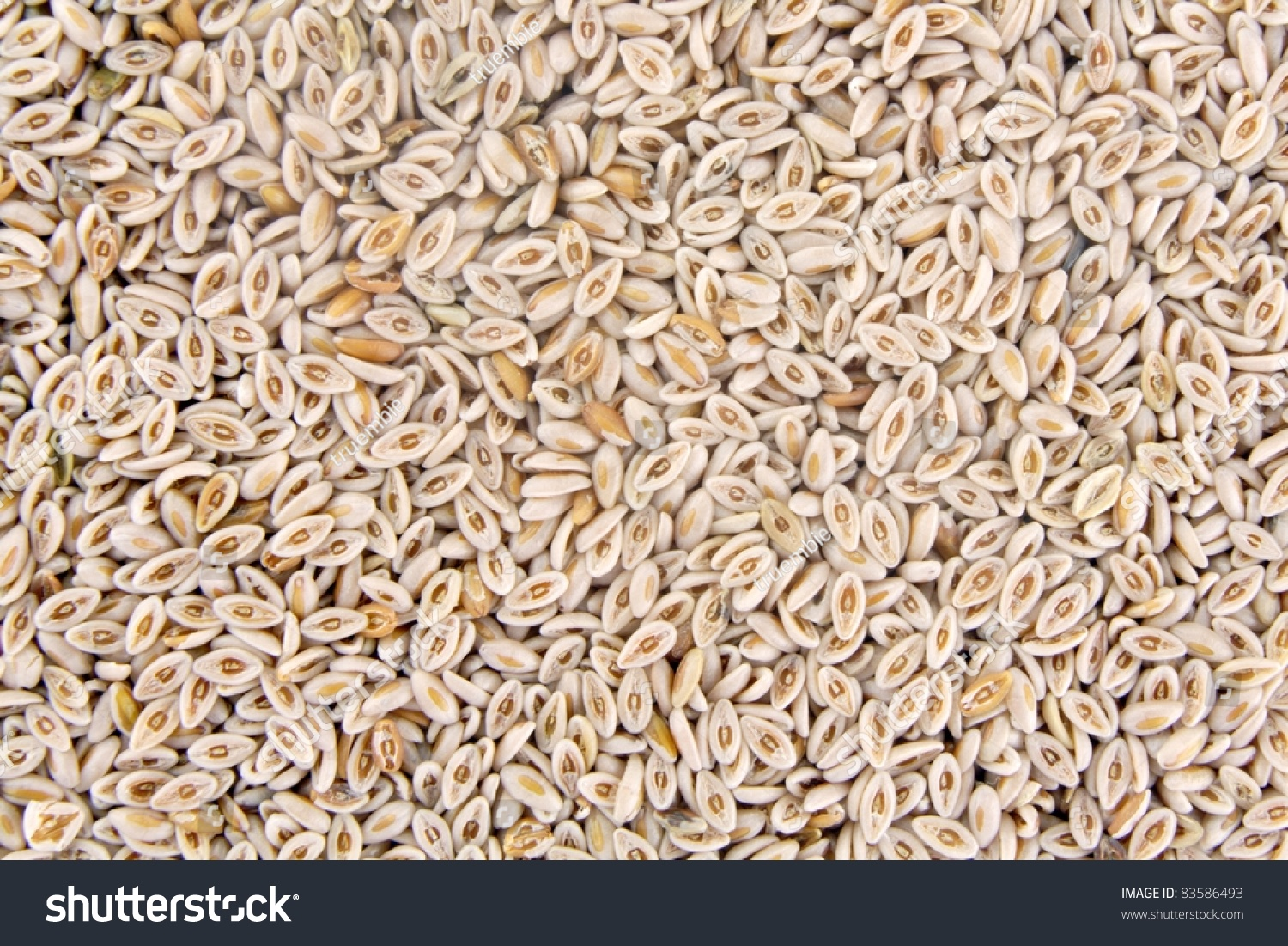 Plantago Ovata Seed As Traditional Remedy For Constipation Stock Photo 83586493 : Shutterstock