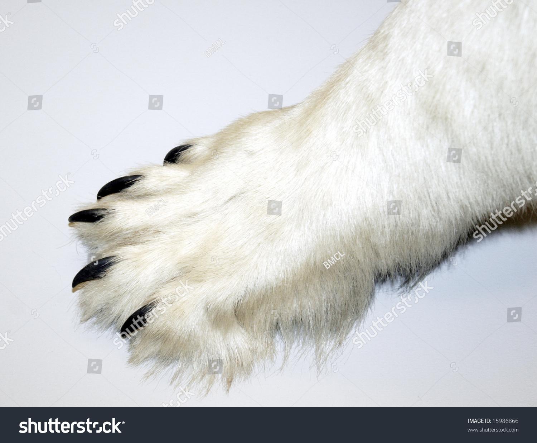 Polar Bear Paw Stock Photo