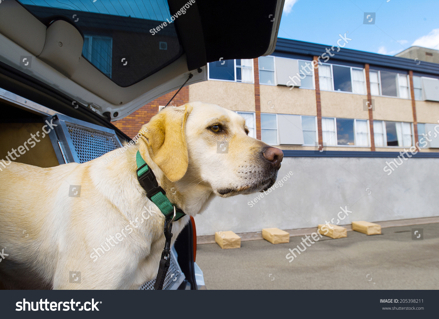 Police Sniffer Dog During A Training Exercise With Sample Packages Stock Photo 205398211 : Shutterstock