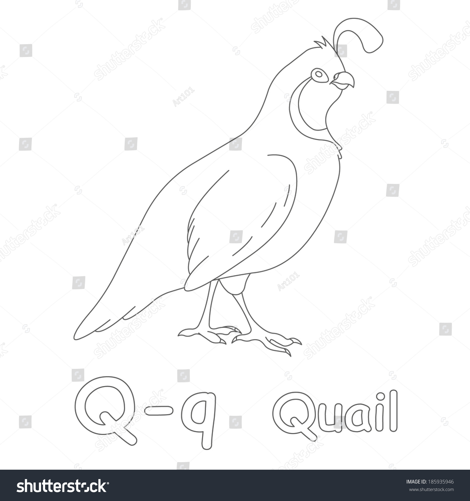 Q Quail Coloring Page Stock Illustration 185935946 Shutterstock