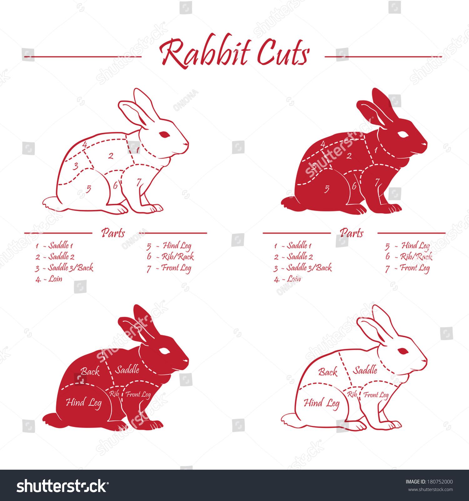 rabbit heart diagram circuit maker pics photos pork meat cuts sexy girl and car
