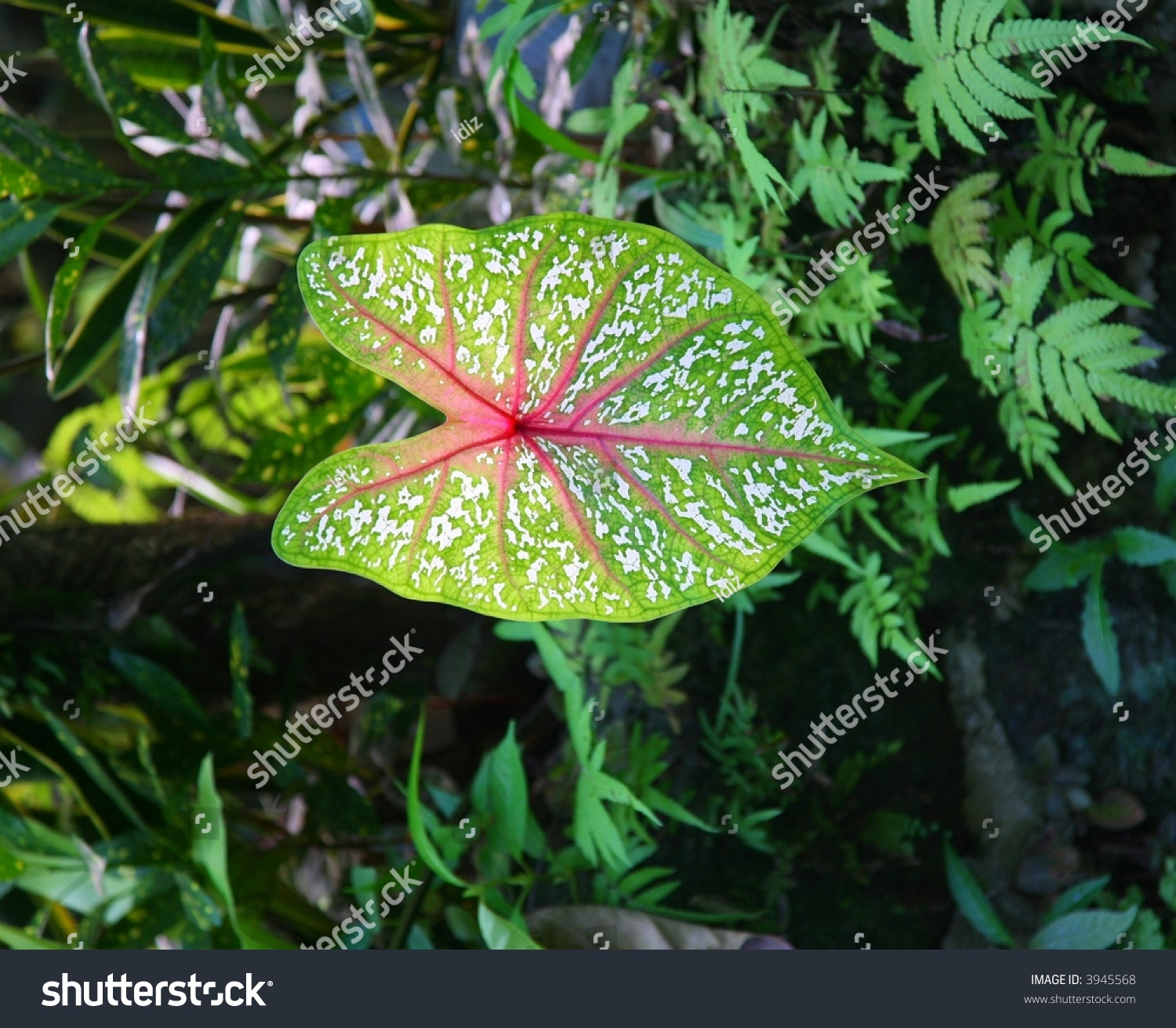 Rainy Fall Wallpaper Rainforest Plant Leaves Stock Photo 3945568 Shutterstock