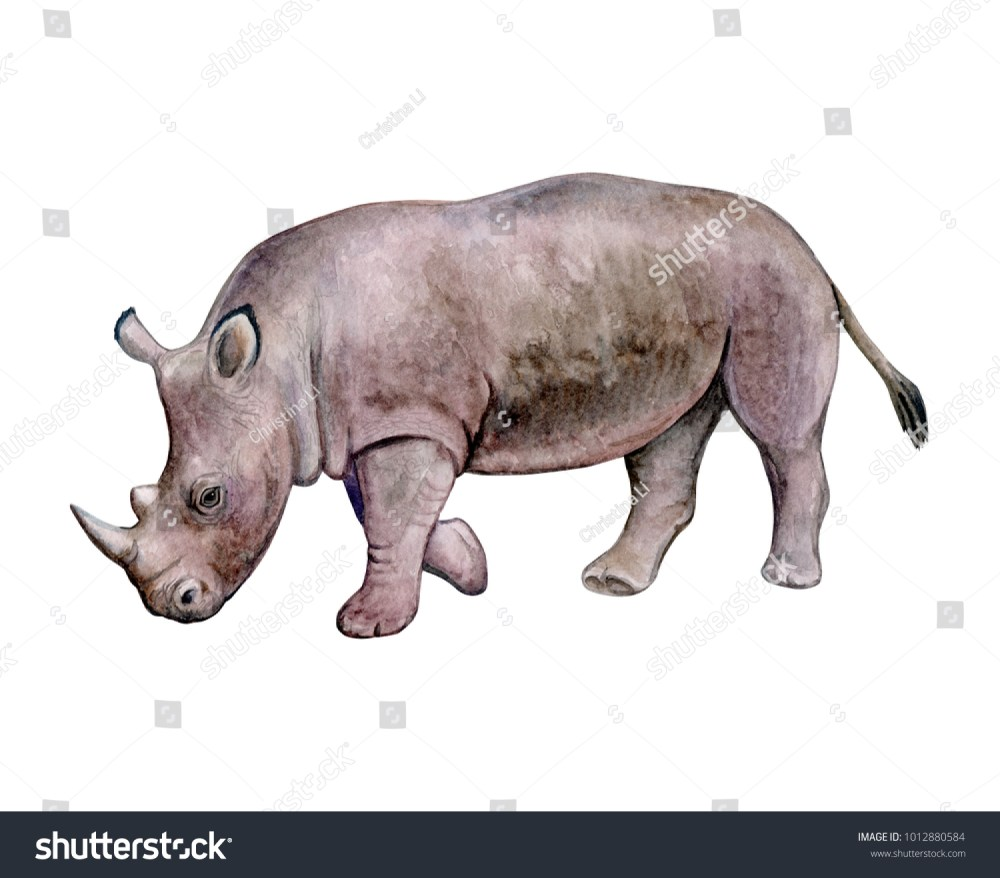 medium resolution of rhinoceros rhino isolated on white background watercolor illustration template clipart handmade